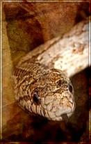 *Nuage de Serpent*