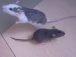 Rat0ux
