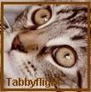 Tabbyflight