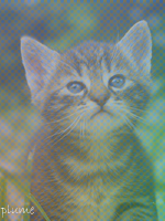 Petite Tigresse