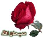 أبو سارة