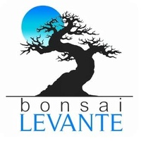 BONSAI LEVANTE