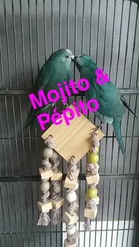 mojito&pépito