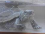 War_Turtles